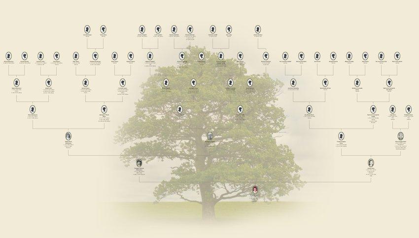Qual O Melhor Programa Para Desenhar Arvore Genealogica Origines